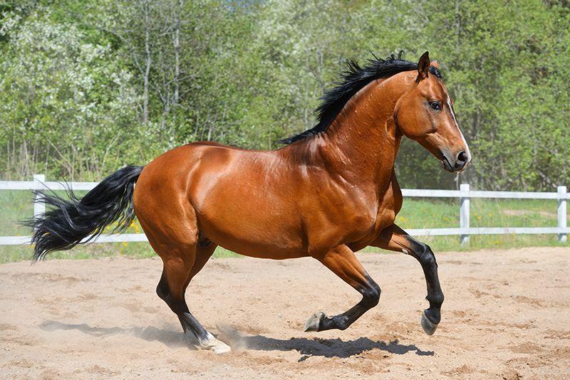 arklys kinu zodiako zenklai