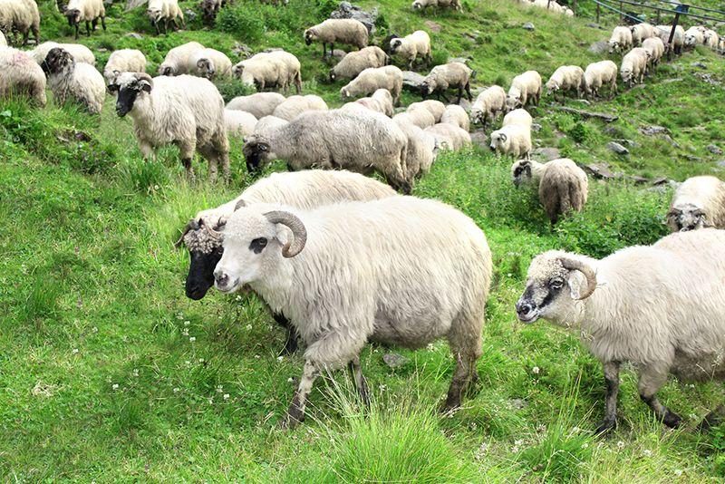 ozka avis kinu zodiako zenklai